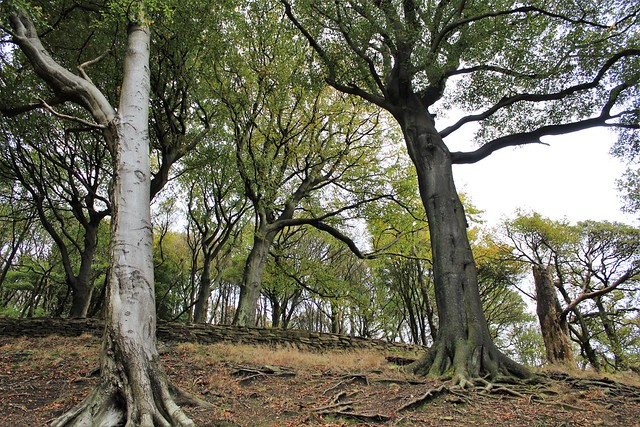 The Ever Spreading Trees ( poetic ' on your knees'  version)