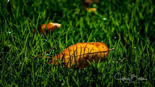 Backlit leaf-743956.jpg