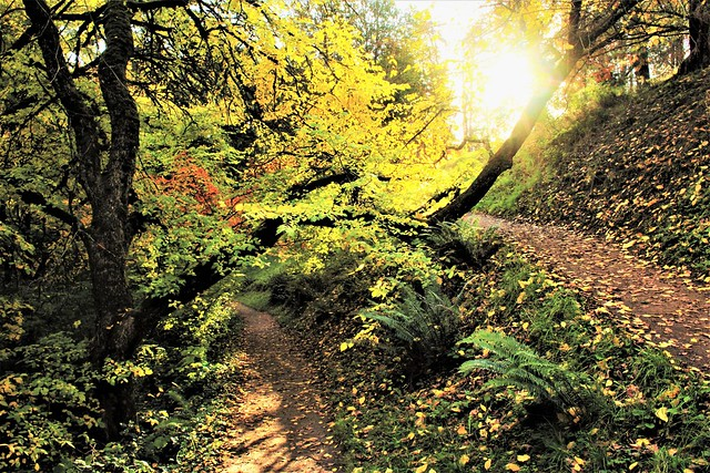 Autumn on Wildwood Trail