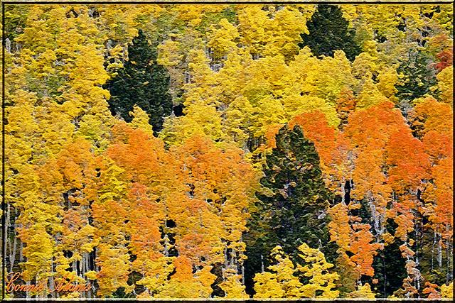 autumnal craquelure