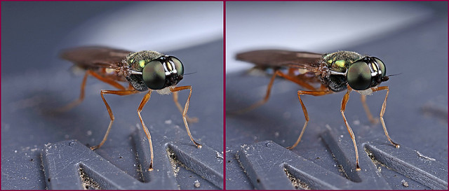 3-D Autumn soldier fly