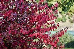 La tardor a Camprodon - Autumn in Camprodon - Otoño en Camprodon