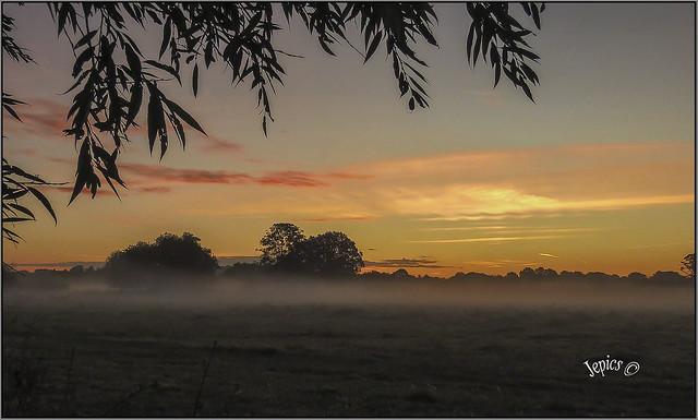 Shallow Mist.