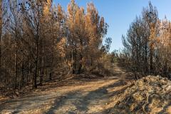 Tierra quemada  -1