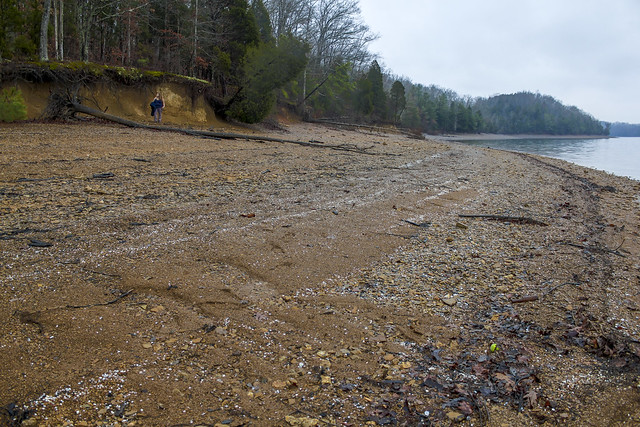 Beach Erosion, Dale Hollow Lake, Accordian Bluff Trail, Clay Co, TN