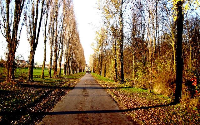 Parco nord Milano, Autumn walk !