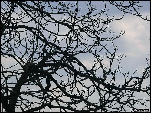 Dead Black Web