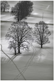 Draw me 2 trees and there shadows. Winter time in La Chaux-de-Fonds. Switzerland. No, 0093.