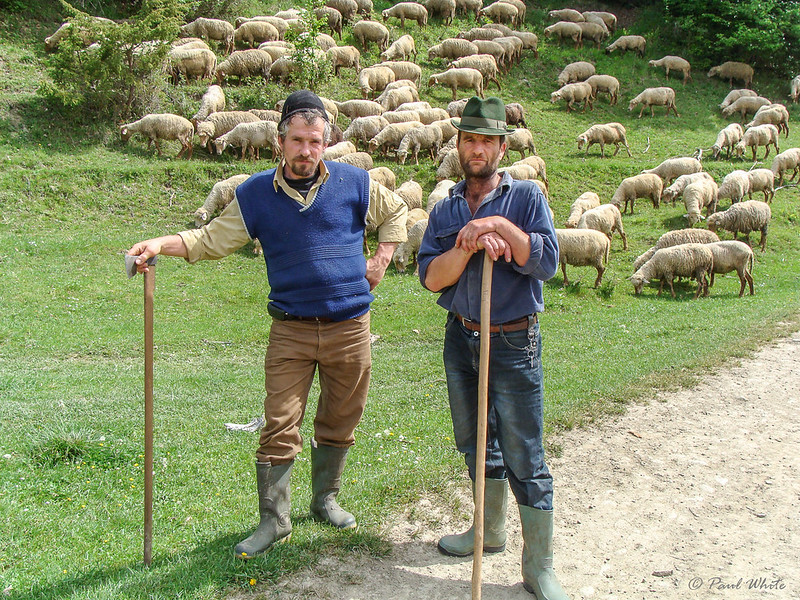 Transhumant Shepherds - Cernat