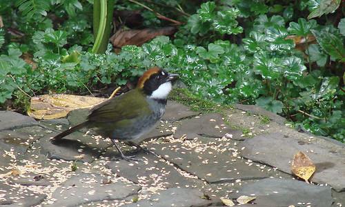 Panama May 2007 116