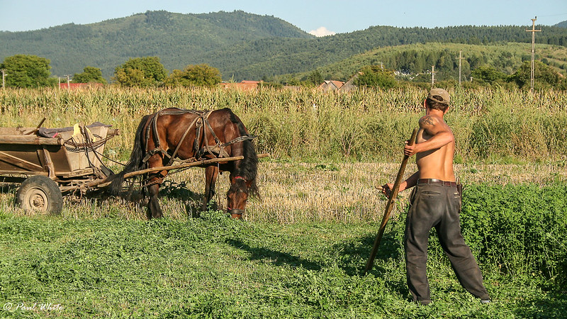 Harvesting with Scythe