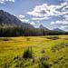 Kananaskis, the perfect meadow for Moose
