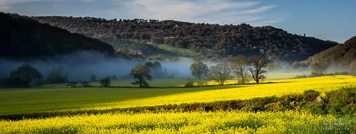 mist sunrise hills monmouth rapeseed riverrivermistwyevalley trees flickr