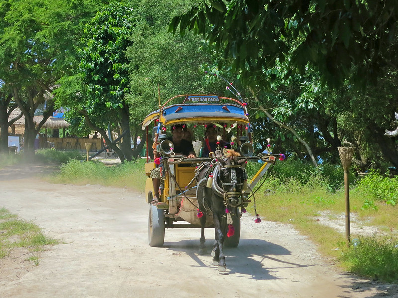 The Cidomo: Only allowed form of transportation on the Gilis