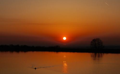 sunset sky tree water canadian goose lancashire explore contrails longridge ribblevalley lancashirelass blinkagain tootleheightsreservoir lancashirelassphotos suebristo
