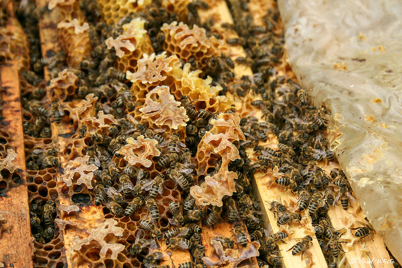 Honey bees at work in Transylvania