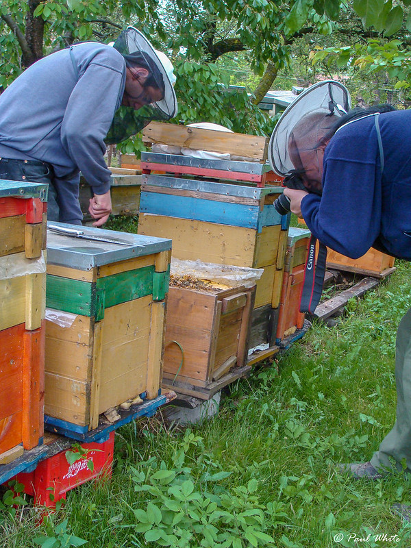Documenting the art of beekeeping in Transylvania
