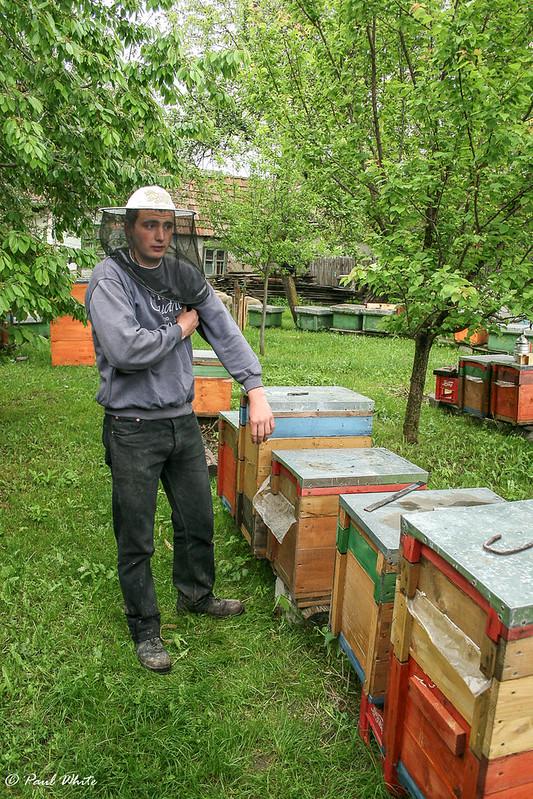 Lukacs Hunor - Beekeeper