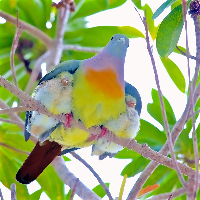 Happy Father Day: Under His Wings