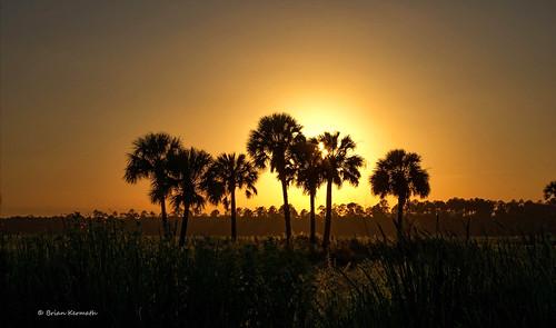 lakewoodruffnationalwildliferefuge sunset cabbagepalms sabalpalmetto florida centralflorida lakewoodruff tree trees palmtrees palms