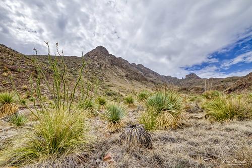 southwest texas desert elpaso hdr yucca ocotillo franklinmountains sotol canon7d esenciadelanaturaleza