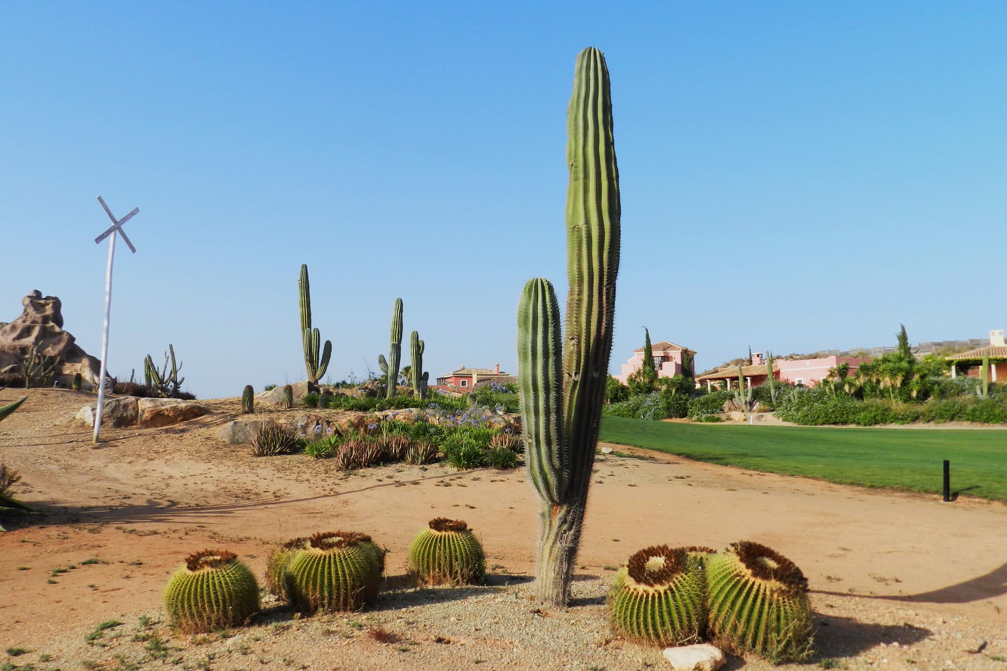 cactus Flora Desierto de Primavera Palomares Almeria