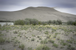 The main dune