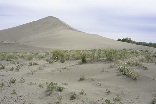 The small dune