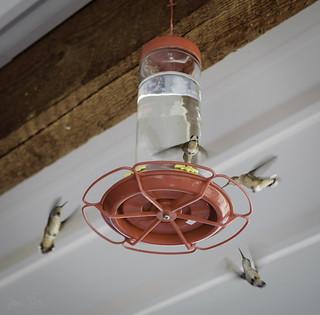 Y-Stop hummingbirds