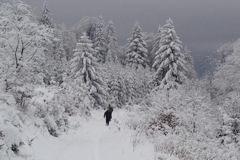 Walking in the Carpathian mountains