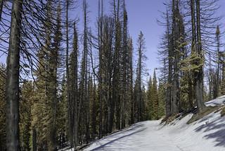 White road, black trees