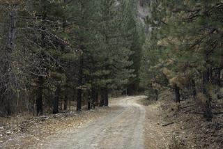 Phifer Creek Road
