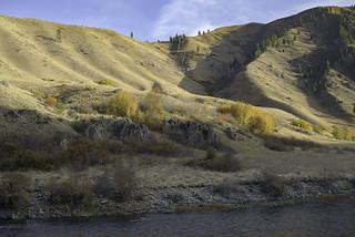 Yellow rocks and shrubs