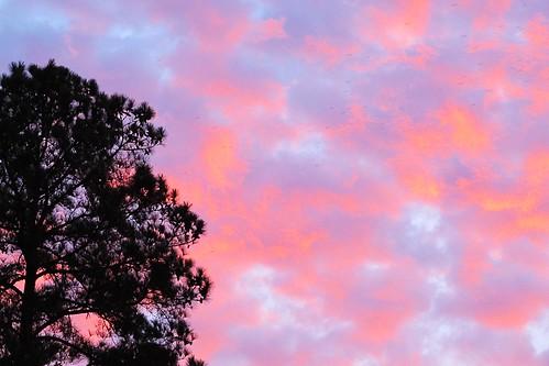 trees clouds sunrise southcarolina lakewylie