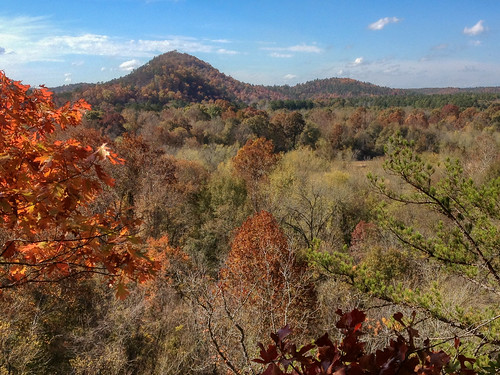 trees leaves nationalforest valley arkansas ouachita thewomble