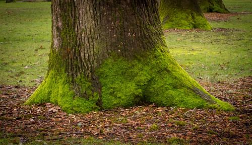 moss oaktree bushpark