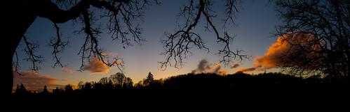 silhouette sunset panorama trees bushspasturepark bushpark