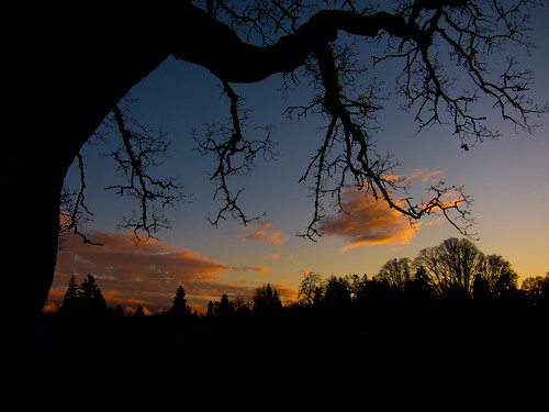 sunset bushspasturepark bushpark clouds trees branches silhouette