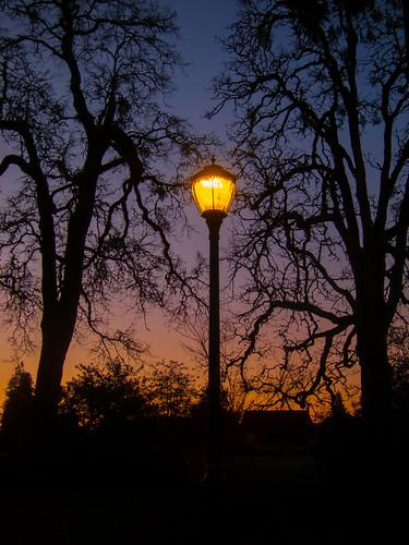 sunset lamppost bushpark bushspasturepark trees branches silhouette