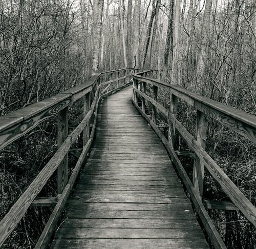 bw beautiful blackandwhite nature forest boardwalk greatswampnationalwildliferefuge places trees woods wideangle walkway photo 2470mmf28 nikond800 photography landscapeorientation