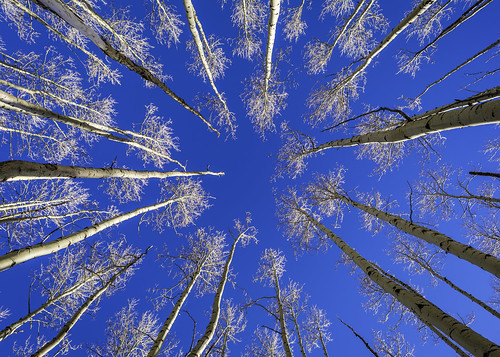 nm newmexico santafe santafecounty trierdesign us usa unitedstates unitedstatesofamerica alpine aspen aspens blue bluesky branches cold countryside explore explored fineartphotography forest image landscape mountain nature photo photograph photography sky snow tree trees trunk trunks up vertical whispering whisperingaspen whisperingaspens winter wood woods f71 mabrycampbell february 2013 february152013 201302150h6a0402 24mm ¹⁄₁₂₅sec iso100 tse24mmf35l