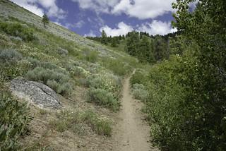 Trail 125