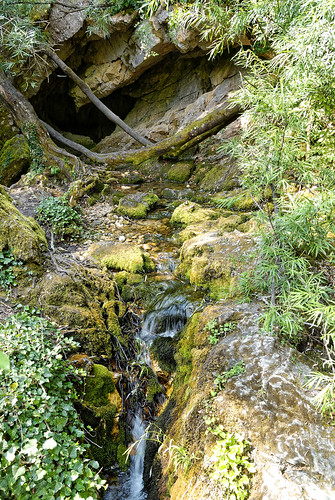 Water from the spring