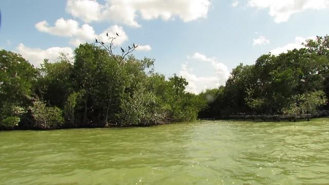 Birds in Mangroves