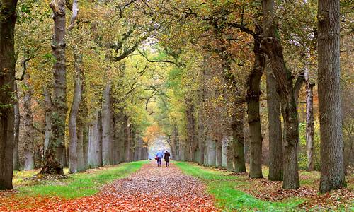 road wood autumn woman dog man fall leaves canon leaf estate herfst hond blad avenue beech weg laan 6d ommen bladeren landgoed eerde canonef24105mmf4lisusm canoneos6d blekkenhorstweg