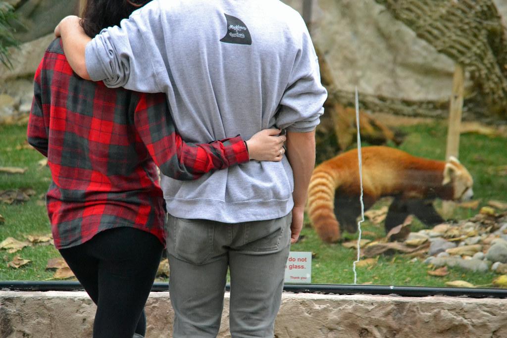 Zoo Date