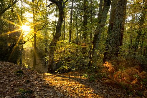 autumn trees sunset leaves forest woods dorset englishcountryside goldenlight
