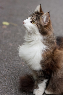 Cat | by missionverdana