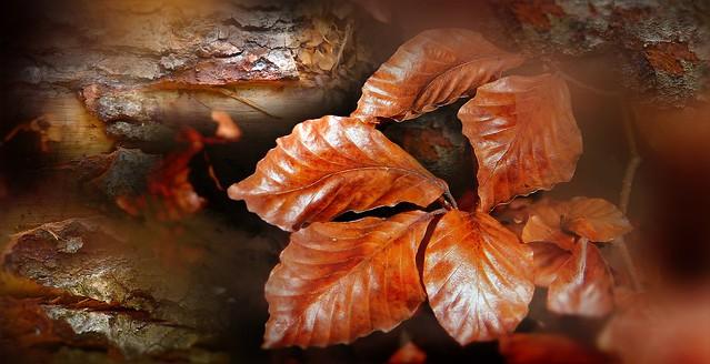 Nul doute c'est l'automne !