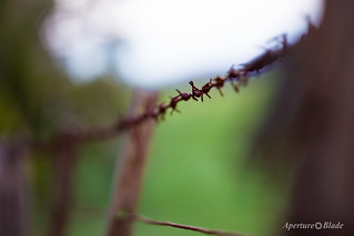 Rusty Wire | by Aperture Blade